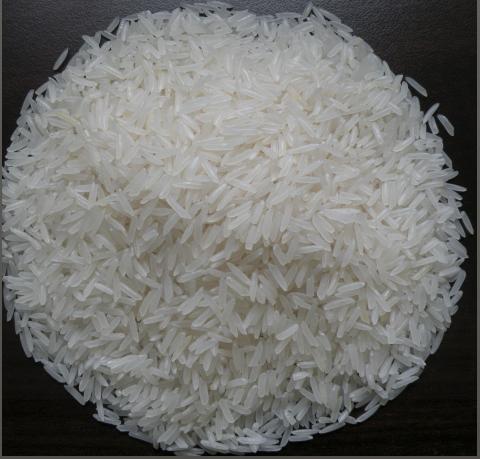 gạo st21