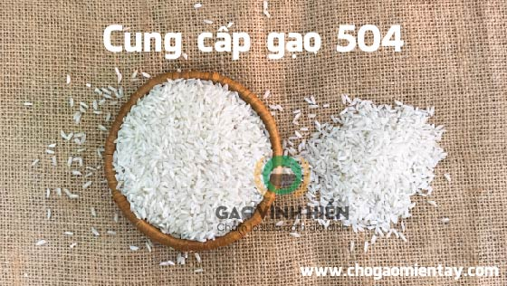 Image result for gạo 504