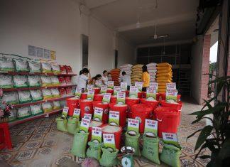 bảo quản kho gạo