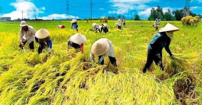 Thị trường lúa gạo Việt Nam Quý I - 2020 (Nguồn: Internet)