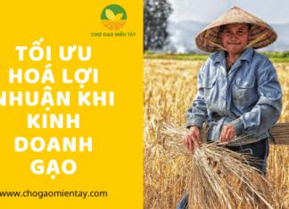 Tối ưu hoá lợi nhuận khi kinh doanh gạo
