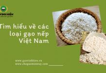 Các loại gạo nếp Việt Nam