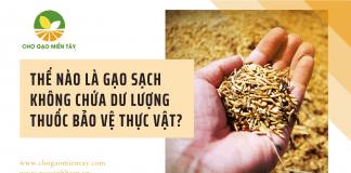 Gạo sạch không chứa dư lượng thuốc bảo vệ thực vật