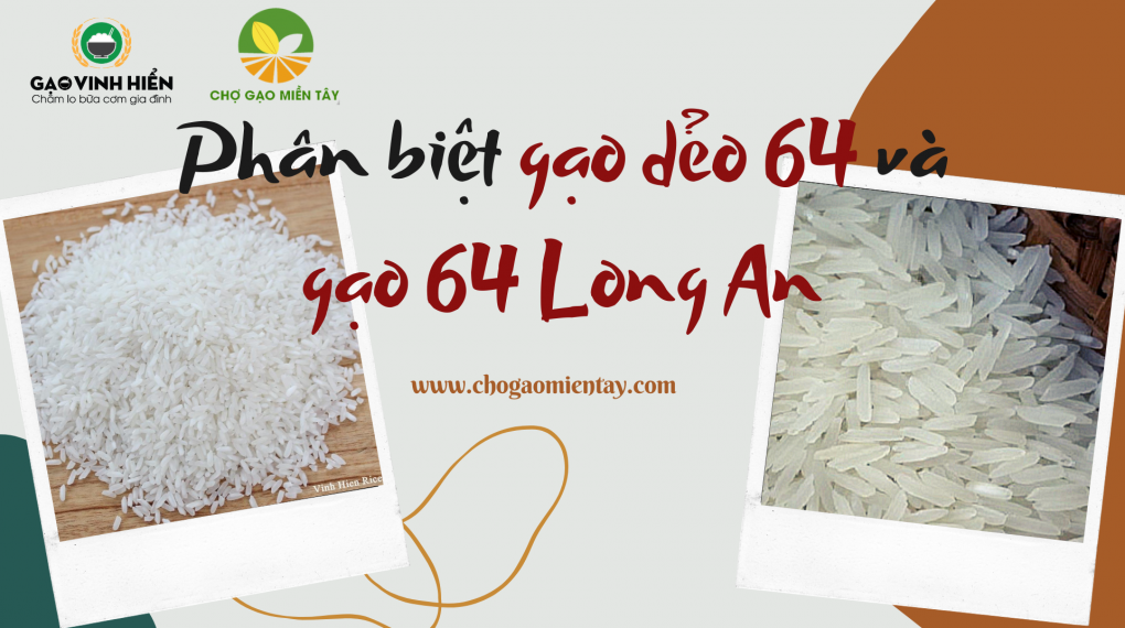 Phân biệt gạo dẻo 64 và gạo 64 Long An