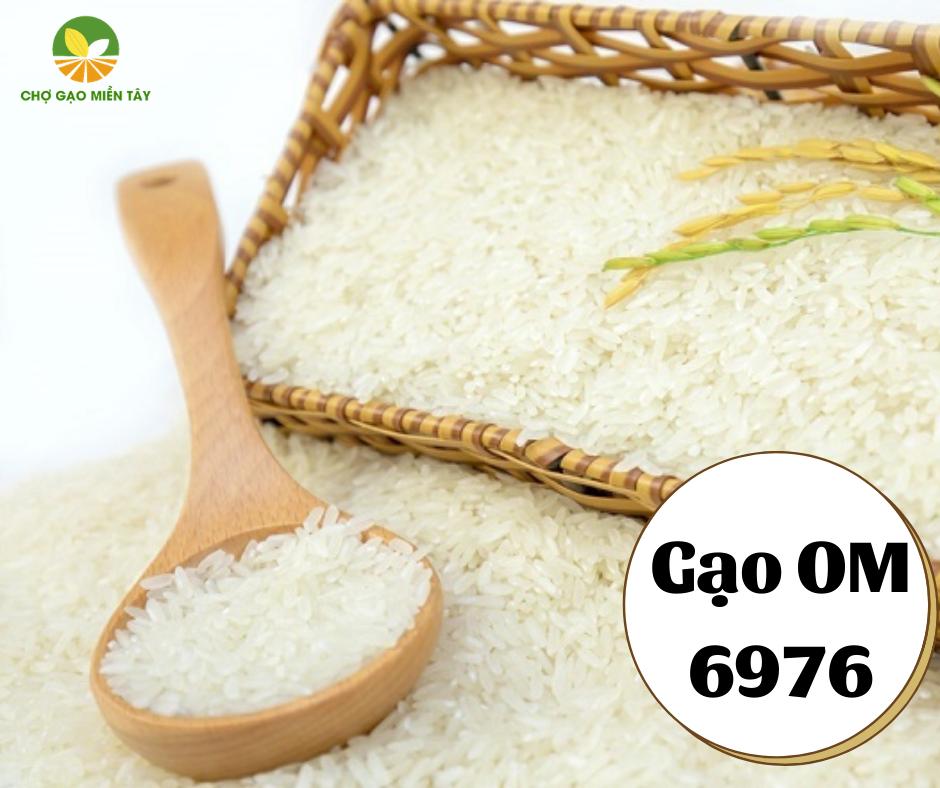 Chợ Gạo Miền Tây cung cấp gạo OM 6976
